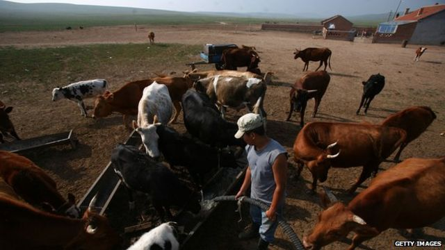 China: Nomadic herders rely on social networks