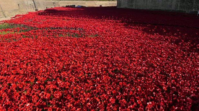 Tower of London ceramic poppies