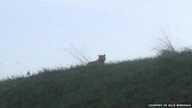 'Tiger' spotted near Paris