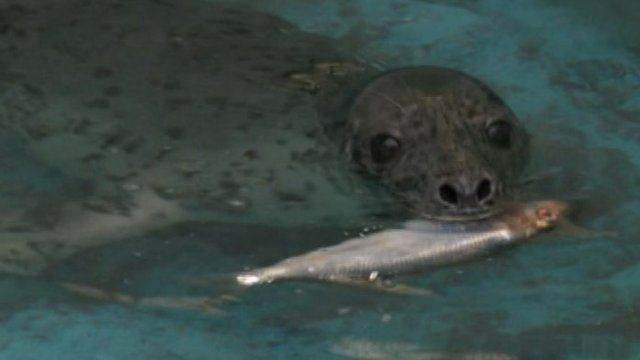 Seal at Mallydams Wood RSPCA Centre
