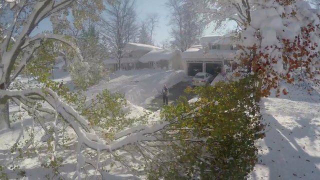 Downed tree in Buffalo