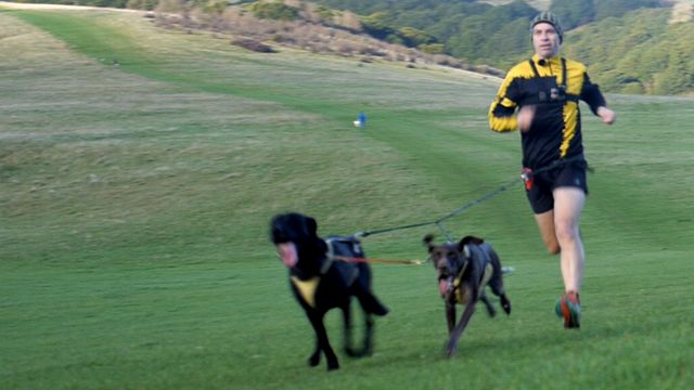 Man running with dogs