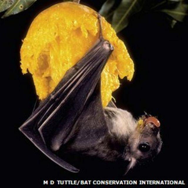 Bat nav: Animals' 3D brain compass found
