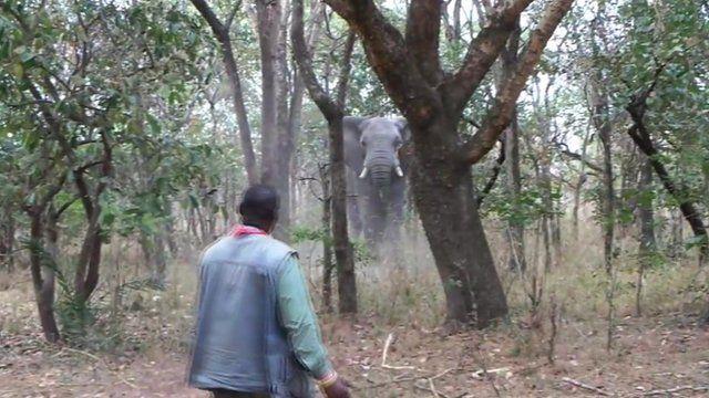 Elephant and wildlife guide Manny Mvula
