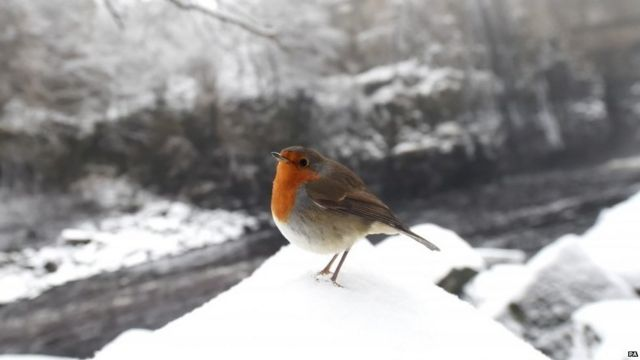 In Pictures: Snowfall around the UK
