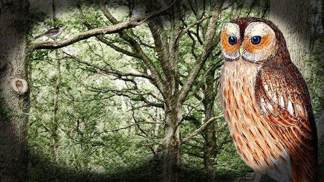 Owl animation