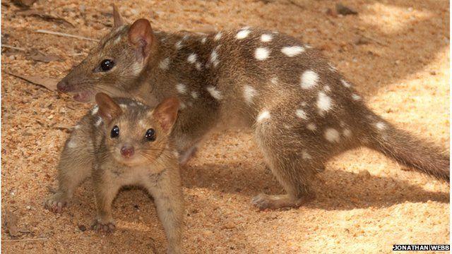 Australian mammals on brink of 'extinction calamity'