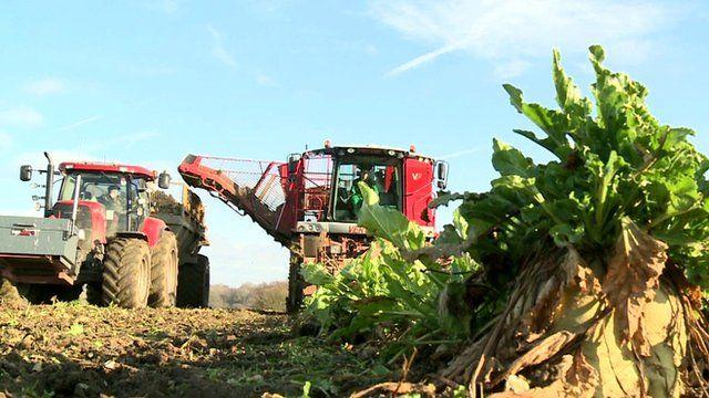 Farm vehicles harvesting