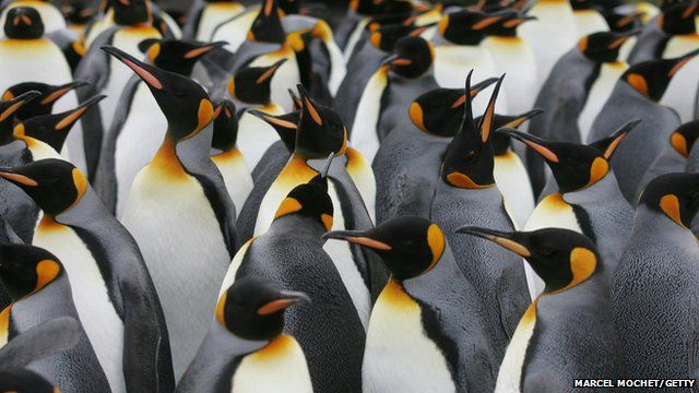 Penguins lost ability to taste fish