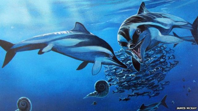 Forgotten fossil found to be new species of ichthyosaur