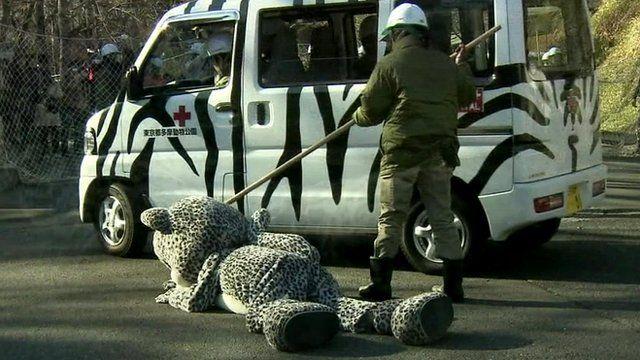 Man in leopard suit is prodded by zoo worker