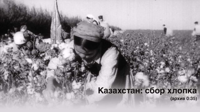 Woman picking cotton in Kazakhstan