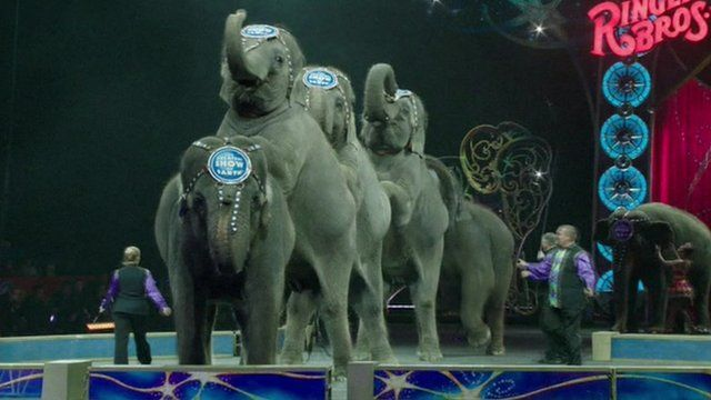 Elephants performing at a Ringling Brothers and Barnum & Bailey Circus