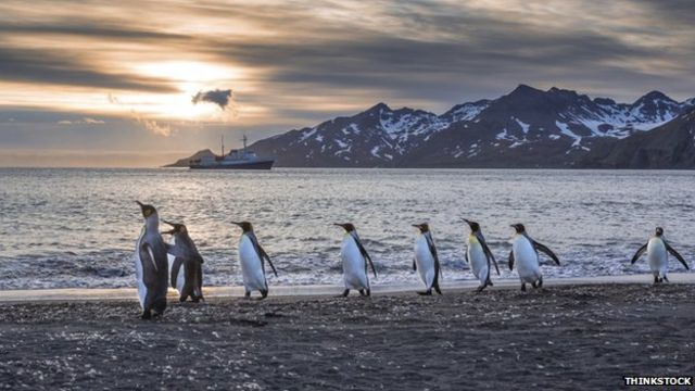 Penguin waddle put to the test