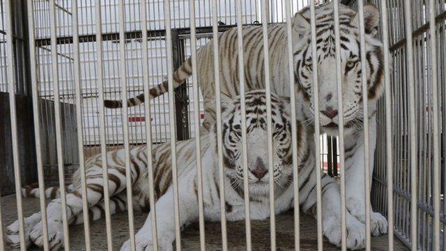 Mexico introduces circus animals ban