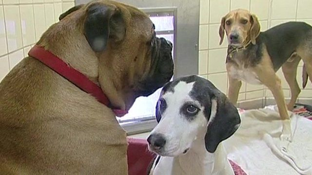 File photo of three dogs in a dogs' home
