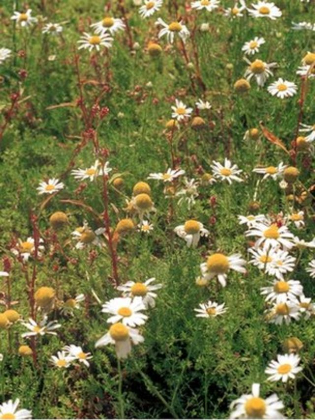 Non-native plants pose 'no threat' to UK flora