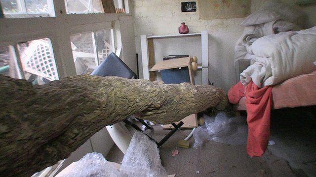 A tree trunk running through a bedroom