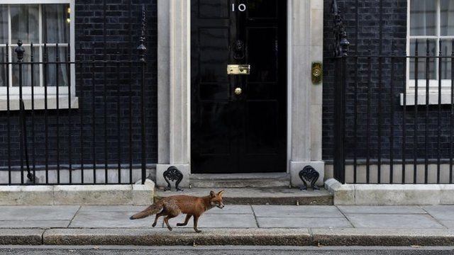 Fox outside Downing Street