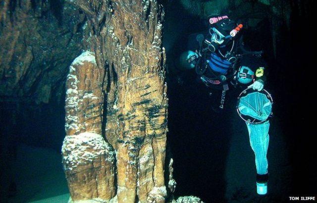 Cave crustaceans 'losing visual brain'