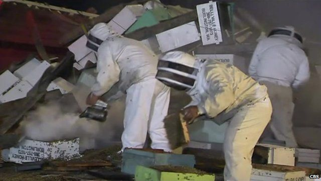 Beekeepers attempting control of the insects