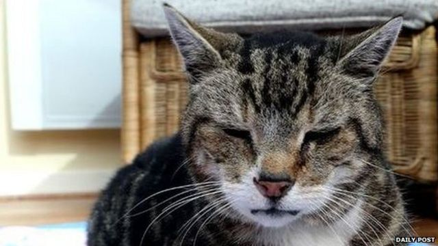 Missing cat George turns up 128 miles away - five weeks later
