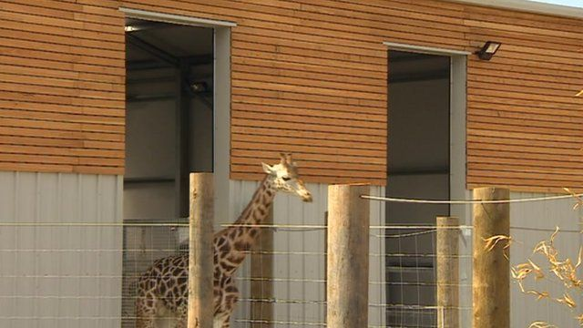 The new enclosure includes very tall doors to accommodate the new arrivals