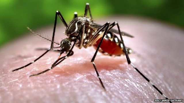 Mosquitoes can spread diseases such as dengue and malaria