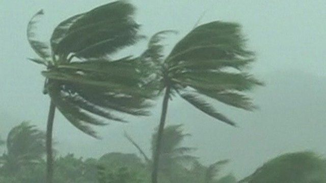 Palm trees being blown against strong winds in Cagayan Province, Philippines