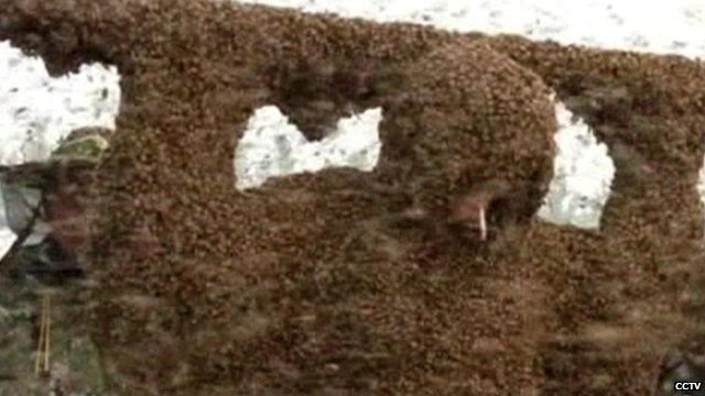 Gao Bingguo setting a world record for being covered in the most bees