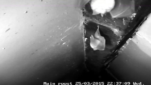 bat cam at oldest timbered house bbc news