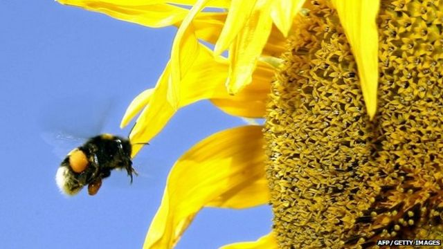 Flybe flight grounded by bee on Southampton to Dublin journey