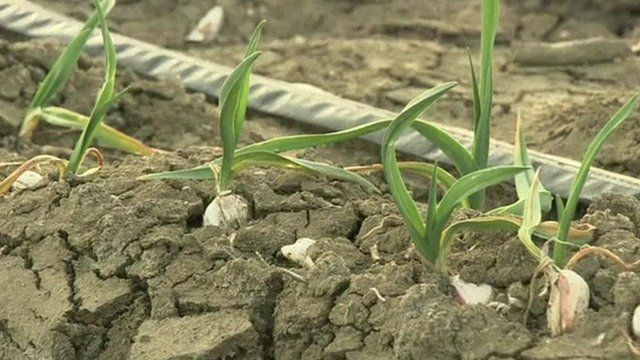 California drought: Farmers ordered to cut water usage