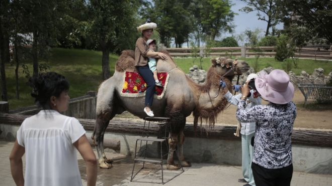 Image of: Chollima North Korean And Her Son Pose For Photo On The Back Of Camel Bbc North Koreas National Zoo Donkeys Dinosaurs And Dogs Bbc News