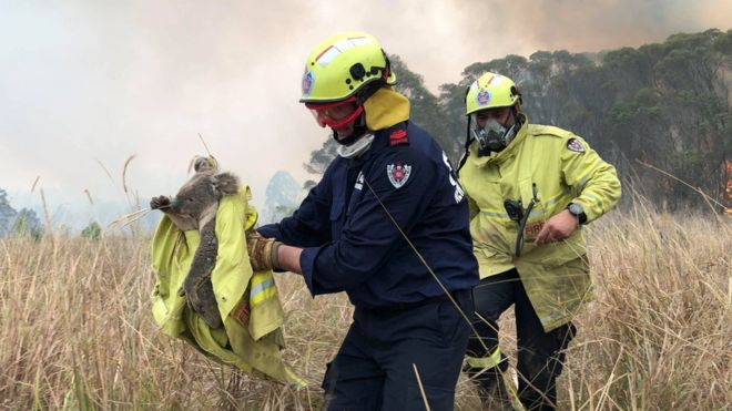 Australian firefighters rescue a koala