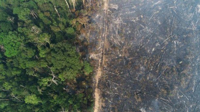 Vista aérea de floresta, com metade da imagem incendiada
