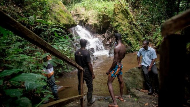 """""""Gabon"""" be 1st African nation paid by 'Cafi for protecting dia rainforest"""