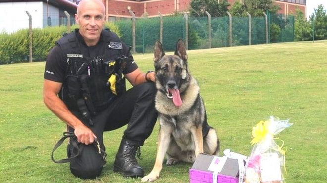 Man who stabbed police dog in Stoke-on-Trent jailed under