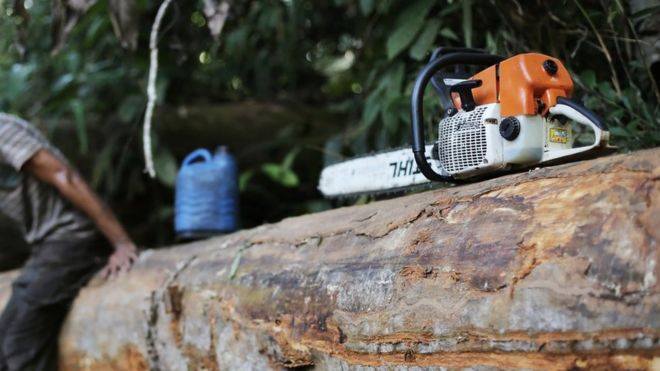 A man, who was hired by loggers to cut trees from the Amazon rainforest, sits on a tree next to his chainsaw in Jamanxim National Park,