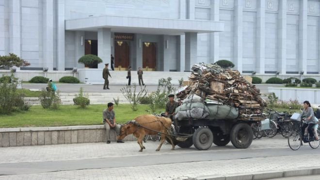 Ox-drawn carriage