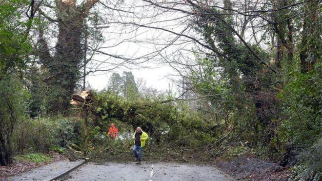 Упавшее дерево заблокировало дорогу Ламбег между Белфастом и Лисберном