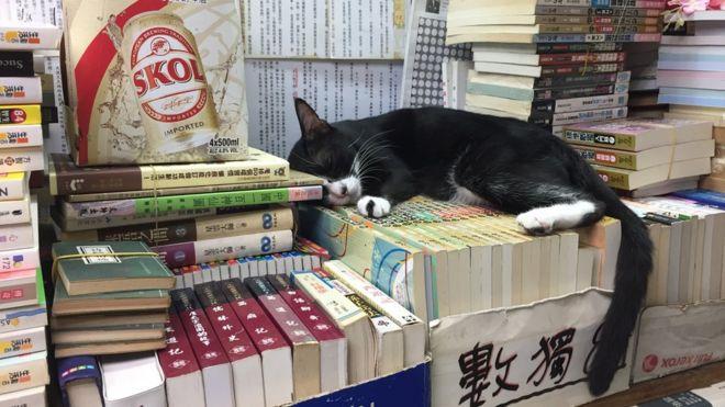森記書店目前有32隻貓。
