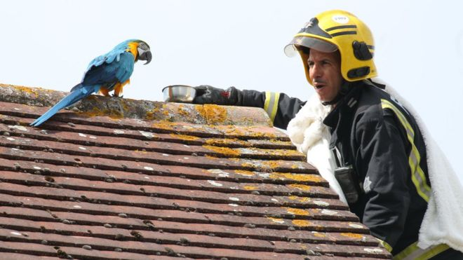 Parrot swears at London firefighter trying to rescue it from