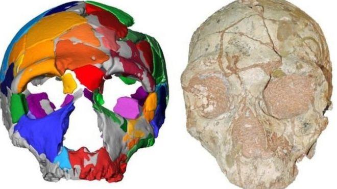 penis w neandertalsach