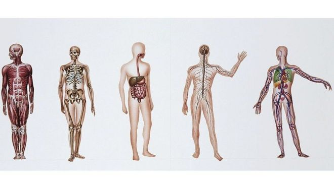 التبرع بالجثث والأعضاء البشرية للبحث العلمي: هدف نبيل وانتهاكات كثيرة