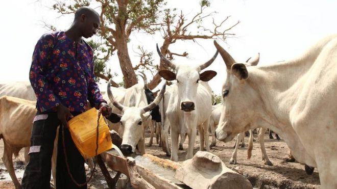 Image Copyright EMMANUEL AREWA Gettyimages Example Fulani Herdsman