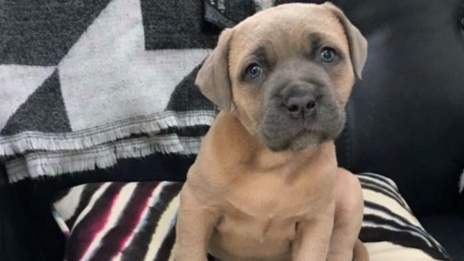 Dog Left To Die In Wednesbury After Giving Birth Bbc News