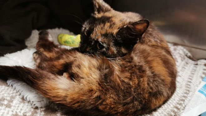 Wounded cat found 'severely abused' in Woking - BBC News