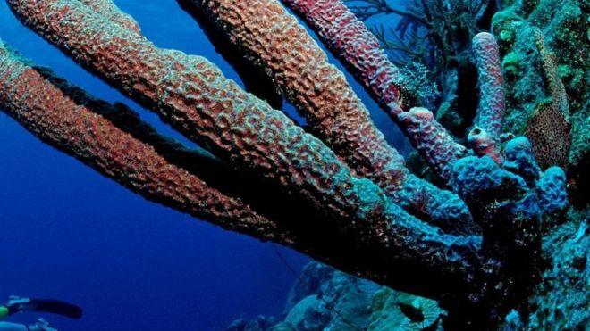 شعاب مرجانية