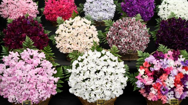 Blooms displayed in baskets